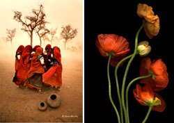 Dust Storm Rajasthan, India 1983 -Steve McCurry and French Poppies Verso -Tulla Booth